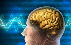 Какие ноотропики нужно принимать для улучшения работы мозга