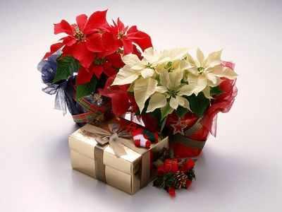 Доставка цветов на праздник — оригинальный самостоятельный подарок