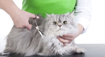 Стрижка кошек и что об этом нужно знать