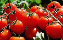 Вегетарианское питание — особенности
