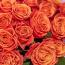 Роза в рубашке: 5 интересных фактов о цветочной одежде