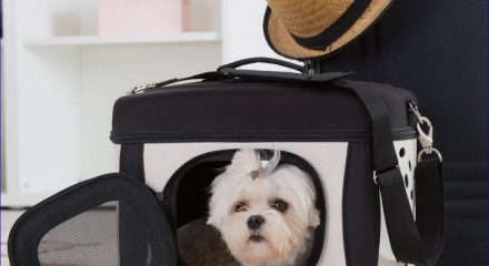Зачем нужны клипперы и клетки для собак